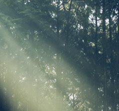 写真集「KOMONO」をtavola calda OHNOで眺めて・味わうとき