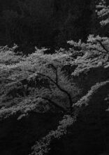 ホテルミュースタイル犬山エクスペリエンス・アート作品納品